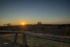 Sonnenuntergang am Brunsberg (hph46) Tags: brunsberg buchholz sonnenuntergang deutschland germany niedersachsen norddeutschland lneburgerheide hdr sony alpha7r