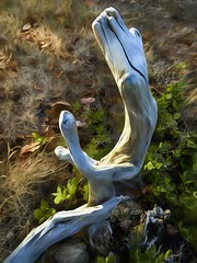 Driftwood Whimsy (SarahLTweedale) Tags: photoart driftwood shapes contours artinnature driftwooddance