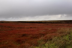 Ness-Tolstadh (elisecavicchi) Tags: tolsta tolstadh nis ness heritage trail journey quiet storm rainstorm rain outer hebrides scotland united kingdom uk landscape cloudy fog overcast rolling grasses explore dark day moor moorland isle harris lewis deep red peat cottongrass eriophorum russeolum autumn ruddy crimson dramatic crofting