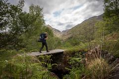 JHF0003839 (janhuesing.com) Tags: rot inverie scotland wildlife hiking highlands mallaig knoydart landscape nature outdoor