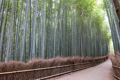 Arashiyama V (Douguerreotype) Tags: green kyoto japan
