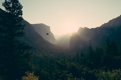 Yosemites Sunrise (Julia Dunlop) Tags: holiday morning early sunrise sun summer roadtrip america usa swiss swisspeople sony sonya7s zeiss zeiss2470mm mountains alps nature landscape stone bird fly free