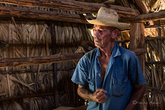 Don Alfredo (Elisabet Aponte) Tags: ifttt 500px cuba viajes travel summer tabaco tobacco puros habanos cigarros cohiba plantacin farm brown smell light luz