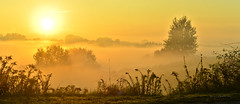 Autumn is here - foggy panorama (ChemiQ81) Tags: 2016 polska poland polen polish polsko chemiq  poljska polonia lengyelorszgban  polanya polija lenkija  plland pholainn   pologne puola poola pollando    wojkowice sun soca outdoor zagbie dbrowskie dabrova basin jesie autumn podzim wschd poranek rano morning rise rising sunrise fog foggy mga mglicie svtn mlha slunce siemianowice lskie przeajka
