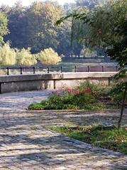 Nad stawem (klio2582) Tags: bytom park rose tree willow path stone wall september morning light