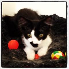 upload (merrickball) Tags: cat square kitten lofi squareformat finnegan stinks iphoneography instagramapp uploaded:by=instagram foursquare:venue=50f985e8e4b0e1894c0e5653