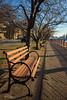 Adopt-A-Bench (Strykapose) Tags: newyorkcity newyork roosevelt parkbench rooseveltisland ef2470mmf28lusm blackwellisland welfareisland canon5d2 minnehanonck varkenseylandt