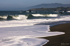 High Tide (San Francisco Gal) Tags: seascape beach nature landscape sand waves sonoma windy windblown portuguesebeach sonomacoaststatebeach