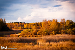 Colours of autumn in Finland
