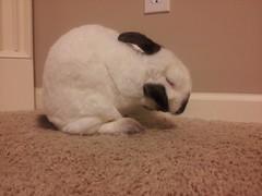 20130331_204806 (The Hoover Street Rag) Tags: bunnies millie
