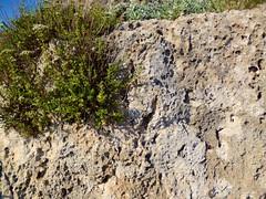 Rhodes (giovanni.morelli) Tags: sea islands mare greece grecia rodos rhodes rodi isole