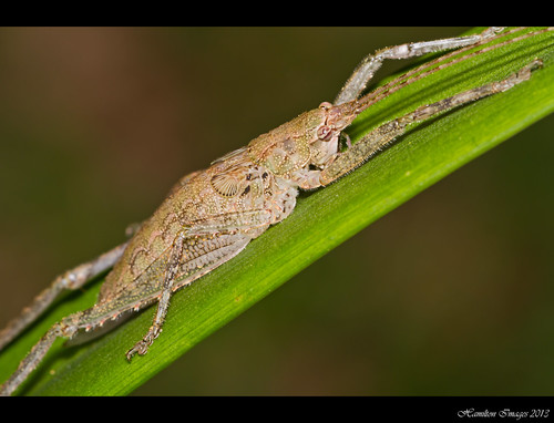One More Cool Katydid