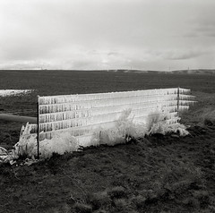 Iced Fence, Oregon (austin granger) Tags: film ice field oregon fence square frozen farm crop barbwire icicles sprinklers gf670 austingranger