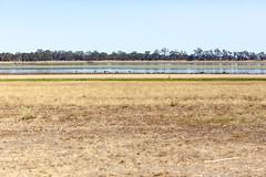 Lake Wallace (julie burgher) Tags: lake australia victoria edenhope lakewallace
