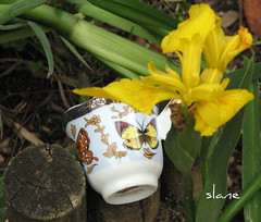 Butterfly Tea Cup (snap713) Tags: iris japanesegarden tea teacup hermannparkjapanesegarden