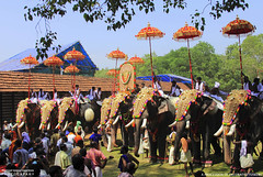 MG_3546 (PRATHAPSTOCKIMAGE) Tags: india elephant festival canon religion decoration kerala trissur pooram nettipattom eos60d
