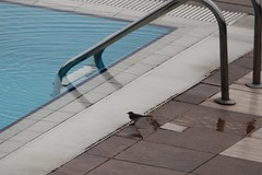 Secret Garden Spa - Daneşti, Jud. Maramareş, Romania (Wayne W G) Tags: europe easterneurope romania maramures danesti hotel hotels spa spas 2012 pool pools swimmingpool swimmingpools bird birds aves animal animals nature