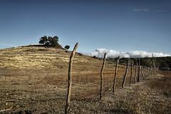 Morning fence (Rey Cuba) Tags: tree fence landscape cub nikon cuba trinidad rey sanctispiritus d600 cubapeople nikond600 cubalandscape cubalife reycuba cubanisland cubafields