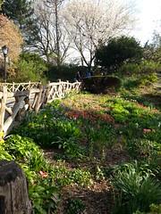Shakespeare's Garden (starpants) Tags: park nyc garden spring walk centralpark shakespeare flickrandroidapp:filter=none