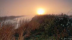 Spring Uprising (c. Melon Images) Tags: light sun mist flower beautiful grass fog sunrise canon landscape spring nj lee 5d bog pinebarrens canon1740 2013 whitesbog 5dmarkiii