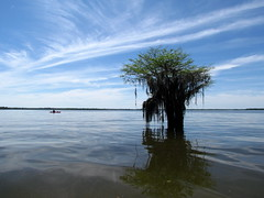 Lowcountry Unfiltered - Lake Marion Ghost Town Paddle - April 2013 (263) (greenkayak73) Tags: friends beagle nature america fun lucy southcarolina adventure kayaking ghosttown mrrussell riverdog lakemarion greenkayak73 randomconnections photopaddling lowcountryunfiltered nitrorev johnatgcc rockscemetery