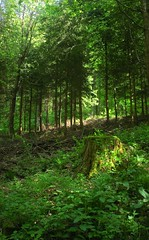Forest Trees (David K. Marti) Tags: wood trees light shadow sun green nature forest outdoors countryside wooden woods day natural outdoor country