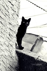 Kitty, kitty (Umapepe) Tags: naturaleza blancoynegro window nature beautiful animals canon ventana ojo photography photo blackwhite kitty gato animales gatito fotografa immagini t4i umapepe jlbg