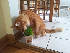 grass he can actually eat without getting murdered by my mom
