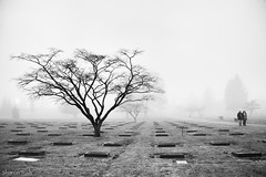 they died for beauty (bluechameleon) Tags: trees winter people blackandwhite bw cemetery fog headstones plots mountainviewcemetery bluechameleon artlibre sharonwish bluechameleonphotography