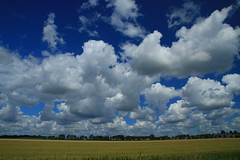 Fairy floss (alideniese) Tags: blue sky white field yellow clouds landscape outdoors horizon sunny daytime