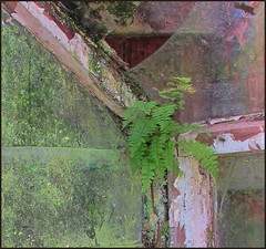 Corner of the old greenhouse (judmac1) Tags: greenhouse decay corner window broken
