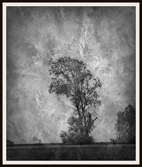 Textured (patrick.verstappen) Tags: texture textured twitter trees blackandwhite bw patrickverstappen flickr facebook field photo picassa pinterest pat picmonkey ipernity ipiccy imagine inspirational nikon d7100 sigma summer