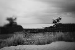 Prora (hansekiki ) Tags: rgen prora ostsee balticsea strand beach squeezerlens canon 5dmarkiii