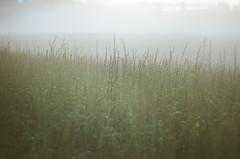 Film XXVI : 2016 (Paula Zaria) Tags: film old 35mm zenit analog fog bent meadow nature grains