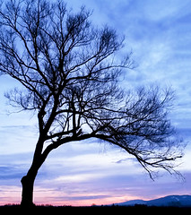 Silhouette of the tree (M.patrik) Tags: tree silhouette autumn fall dramatic clouds boughs landscape sunset