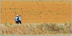 Le chemin<>The way. (France-) Tags: 1653 marcher camino spain espagne femmes deux two champs fields chemin way