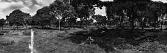 Grave Crosses (erikjnainggolan) Tags: grave graves graveyard cemetary sadness grief tumbsone death religion sorrow wide ultra panorama panoramic olympus omd black white bw n landscape jakarta indonesia