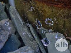 Water on web like jewels (Dancinggecko) Tags: nature naturalworld wildlife flora fauna insects flowers greatbritain britain uk unitedkingdom green water morningdew jewels