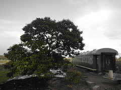 DSCN0316 (mavnjess) Tags: 1 may 2016 cripps pink lady apples orchard red black white bw sacha cin lucinda giblett cooking hibiscus compost composting compostbays chestnuts chestnut tree train carriages rainbow trolley bus trolleybus carriage