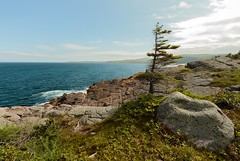 Windswept (Karen_Chappell) Tags: eastcoast eastcoasttrail newfoundland nfld canada ocean seascape landscape scenery scenic tree coastline atlantic atlanticcanada avalonpeninsula green blue sky clouds rock rocky maddoxcove canonefs1022mm wideangle
