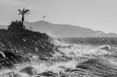Olas (J Fuentes) Tags: flickr save olas palmera agua almuecar costatropical granada blancoynegro blackwhite bw mar sea mediterrneo waves