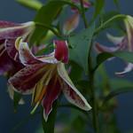 oneplant, ouryard, jdy199 XX201607179073.jpg thumbnail