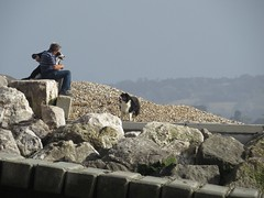 3584 Dogs and owners taking a rest (Andy - Daft as a brush - don't ask!) Tags: 20160820 bbb beach ccc colliedog ddd dog dogwalker kent man mmm people ppp romneysands
