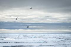 Arctic Ice (D-Niev) Tags: norway svalbard
