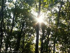 #forest #peaceofheaven #tree #wood #beautiful #baum #wald #wanderlust #albania #green #nature #wunder #welt #natur #wander  #awesomr #chill #run #sun #sky (Jurgen Pergega) Tags: beautiful peaceofheaven wander wood run sky awesomr green forest nature albania wald tree wanderlust natur baum sun chill welt wunder