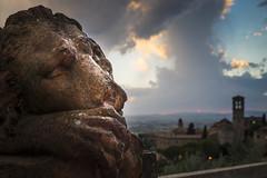 Leone_dormiente (serdor) Tags: leone paesaggio colori luce soffusa assisi italia nikon df nikkor 35afd 35 digitale