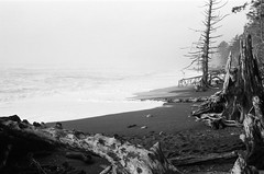 Rialto Beach (deanfuller2) Tags: forks washington unitedstates us mora rialto quillayute canon canonet kentmere film bw scan beach
