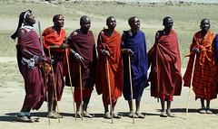 Massai - Begrungstanz (tor-falke) Tags: africa afrika afrique african africanculture africanpeople tribes tribo tribu tribe naturvlker people nativepeople massai massaitribe local ethnicgroup ethnie ethnic ethnology etnias etnia tansania