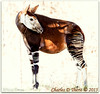 Okapi (ctofcsco) Tags: 1200s 1d 1div animal canon co colorado contrast denverzoo ef200mmf2lisusm eos1dmarkiv explore explored f2 iso125 mark4 markiv okapi unitedstates usa 2015 bokeh denver geo:lat=3975024770 geo:lon=10494968870 geotagged nature northamerica statecapitol telephoto vinestreethouses wildlife wwwdenverzooorg zoo renown awesome pic photo picture image