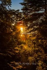 20160828-IMG_7746-WM (Pamela McLellan Zmija) Tags: pamelamclellanzmija saugeenshores portelgin sunset beach lakehuron goblesgrove sunshine